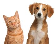 ペット関連商品