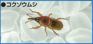 komebitu1-02