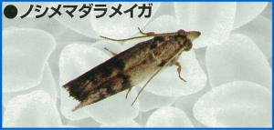 komebitu2-06
