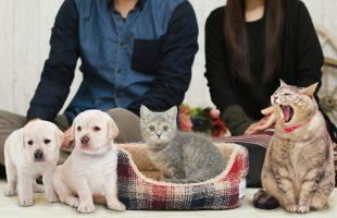 3つの新アイテムでペットとの暮らしをより豊かに